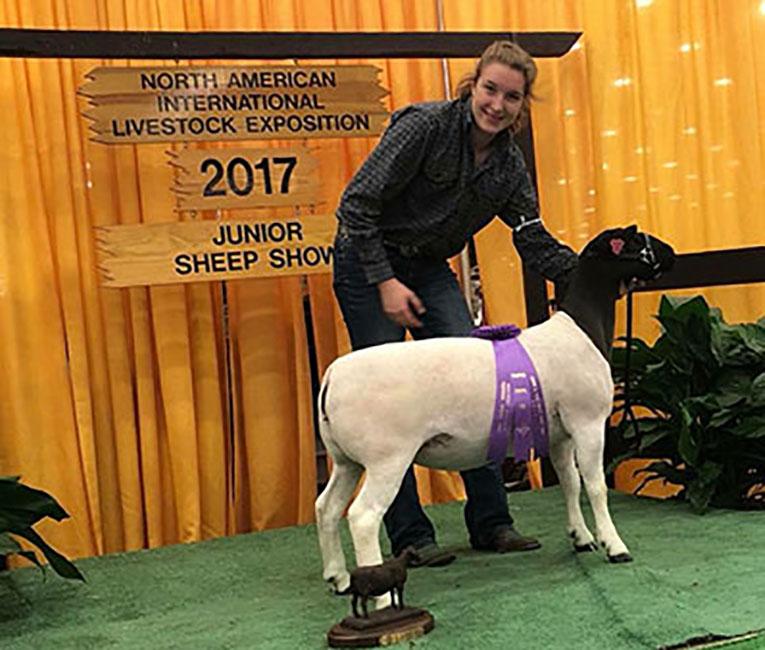 Champion Dorper Ewe 2017 N.A.I.L.E. Junior Dorper Show Congrats Abigail Wilson and Family