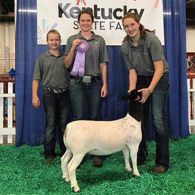 Reserve Champion Dorper Ewe 2017 Kentucky State Fair