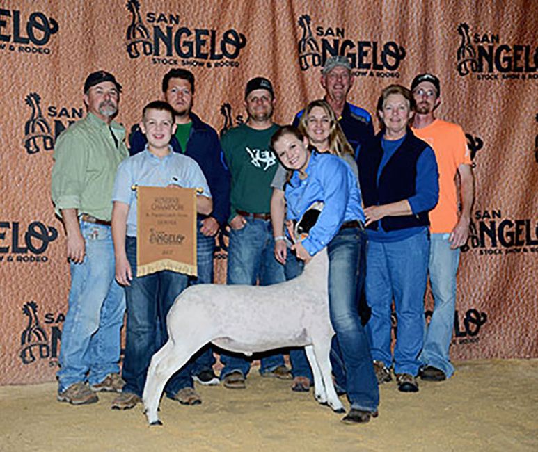 Reserve Champion Dorper Wether 2017 San Angelo Stock Show