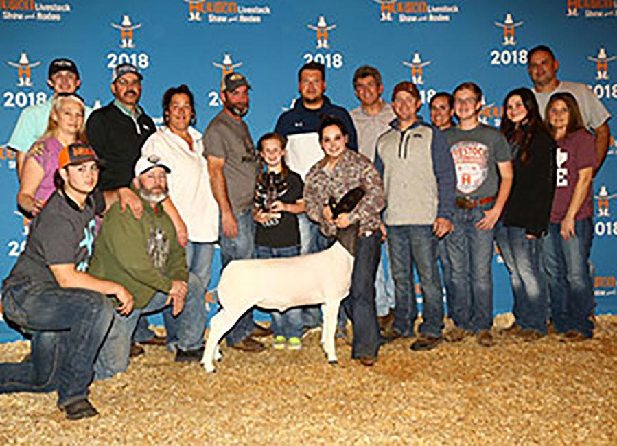 Champion Dorper Wether 2018 Houston Livestock Show Congratulations Sydney Thedford
