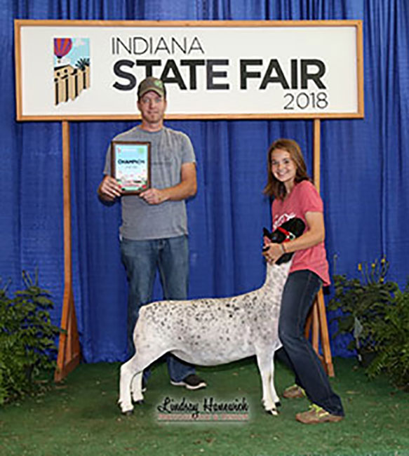 Champion Dorper Ewe 2018 Indiana State Fair Congrats Mitchell Family