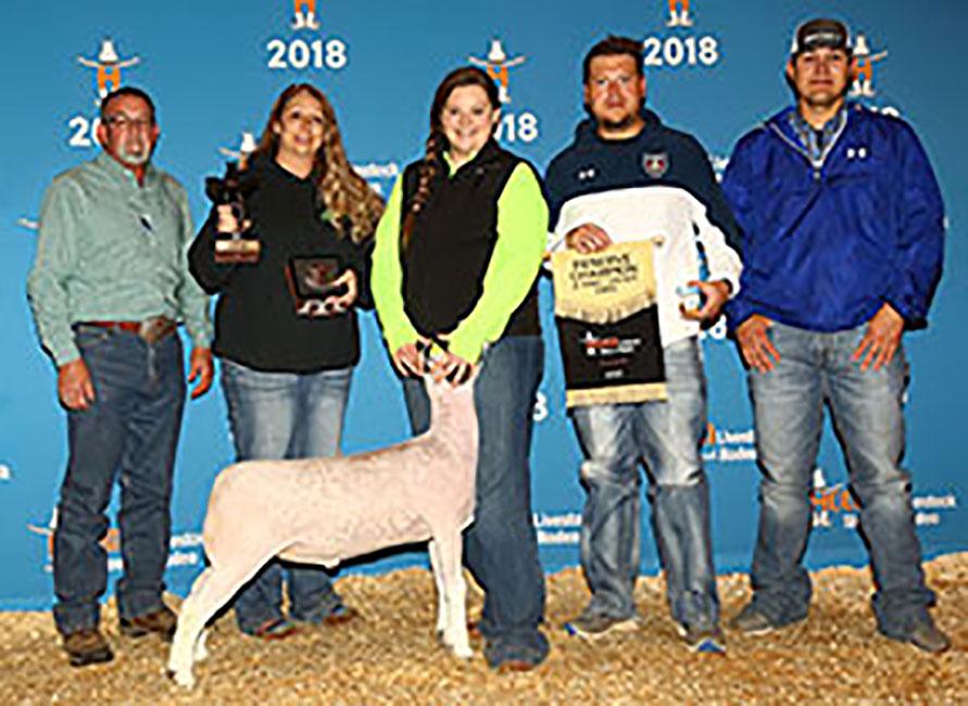 Reserve Champion Dorper Wether 2018 Houston Livestock Show Congratulations Rebecca Lambert