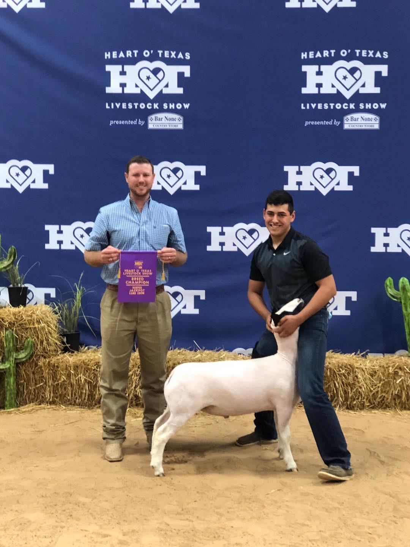 Champion Dorper 2020 Heart of Texas Jackpot Congratulations Blake Meyers