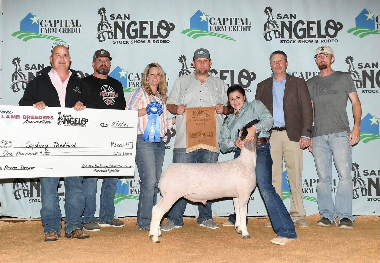 Reserve Champion Dorper 2021 San Angelo Stock Show  Congratulations Sydney Thedford!